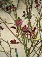 Les filles-feuilles - Violeta Clair