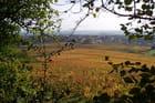 Vue d'automne sur les vignes -