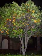 Orangers - MICHELINE KAIJI