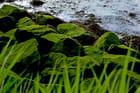 Roseaux bord de mer par Brigitte SINDING sur L'Internaute