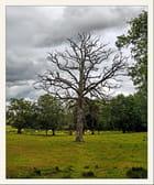 L'arbre mort. - Serge AGOMBART