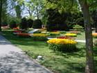 Tulipes -