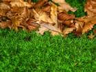 Poussée de racines sur tapis de mousse - Brigitte SINDING