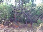L'arbre amoureux par LUCIEN MACARIO sur L'Internaute