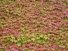 Belles couleurs - Ludivine ROY