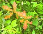 feuilles lumineuses - Raymond LEFEBVRE