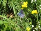 Fleur de Papillon - Lucien BERMUDES