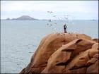Jongler - pierre bassette