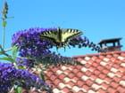 Papillons - Annie Cazes
