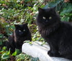 Les chatons jumeaux - Gérard ROBERT