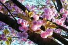 Eclats de printemps - Jean Louis LANQUETIN