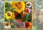 Vie au jardin - Malou TROEL