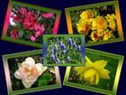 Couleurs éclatantes du printemps par Jacqueline DUBOIS sur L'Internaute