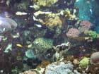 Aquariums de Saint Malo - Sylvie Fougeray