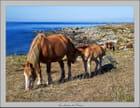 Les chevaux de l'Iroise - Serge AGOMBART