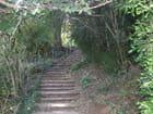 Les escaliers dans la verdure - Patrice PLANTUREUX