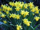 Bouquet de printemps - Malou TROEL