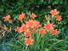 Fleur d'une seule journée - marie-france waltispurger