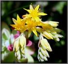Petites plantes grasses par marie jose derel sur L'Internaute