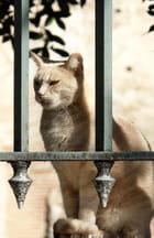 Chat à la grille - André-Marie Nef