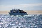 le bateau promenade sur le Bassin d'Arcachon - Genevieve LAPOUX