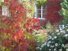 Couleur d'automne au jardin - Béatrice Herlaud