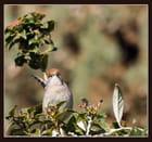 """""""Oiseau mouche"""" par JEAN JACQUES BESSAC sur L'Internaute"""