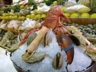 Fruits de mer - anita crespo