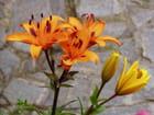 Beauté orange - Rémi Lamarque