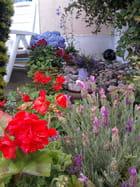 les fleurs du jardin de Marie - marie Parmentier Bellêtre