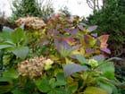 Scène d'automne au jardin - Malou TROEL