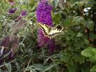 Fleurs et papillon par Alain STORHAYE sur L'Internaute