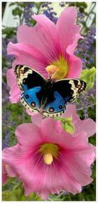 Fleur des Iles - jacques lebourgeois
