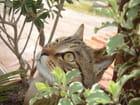 Chat aux aguets par nadine gautier sur L'Internaute