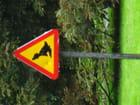 Attention au canard par SYLVIE BERGER sur L'Internaute