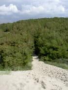 Le chemin de la mer - Wormald DOMINIQUE