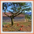 L'arbre aux potirons - ELISE MURIELLE CHAGNEAU