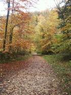 Chemin d\'automne - Sylvia BLASER