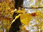 Feuilles 'd'automne - christelle milesi