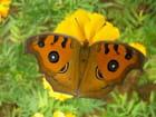 Papillon par Mireille Bozzoli sur L'Internaute