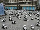 Pandas WWF - Céline DELUZARCHE