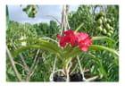 Orchidée et prunes de cythère par Marie France THARAUD sur L'Internaute
