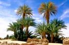 Les palmiers de Chirfa par Alice AUBERT sur L'Internaute