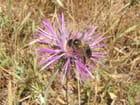Une abeille au travail - Christine Eusébio