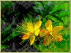 En jaune et vert - Sylvie Urien