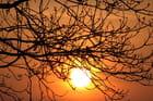 Oiseau à contre-jour au petit matin - Lydie KIMENAU