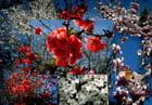 Fleurs au printemps. - Pierre LAVILLE