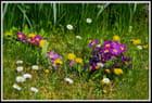 Couleurs de printemps - Bruno HANNIQUET