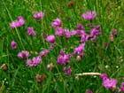 Fleurs des champs par josiane ferret sur L'Internaute