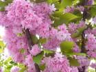 Arbre en pleine floraison par Tinou grossbery sur L'Internaute